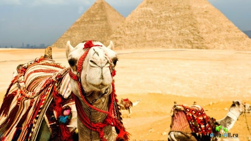 Египет для туристов: особенности отдыха, полезные советы, чем заняться
