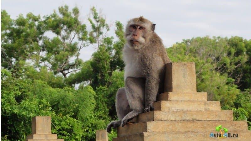 Храм Улувату расположен в тропическом лесу, населенном обезьянами