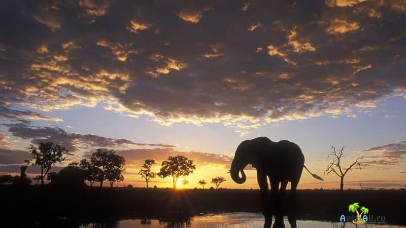 Ботсвана, парк Чобе